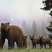 Bear And Cubs Art Print