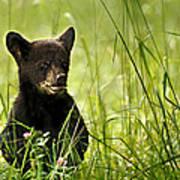 Bear Cub In Clover Art Print