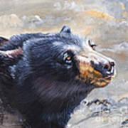 Four Winds Bear Art Print