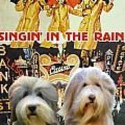 Bearded Collie Art Canvas Print - Singin In The Rain Movie Poster Art Print