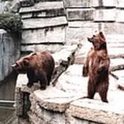 Bears Feeding Time At The Zoo II Art Print