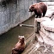 Bears Feeding Time At The Zoo Art Print
