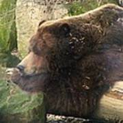 Bears In Ohio. No.23 Art Print