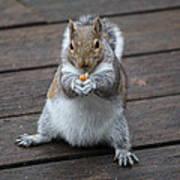 Beast Mode Squirrel Art Print