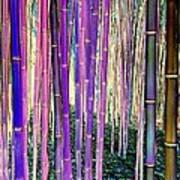 Beautiful Bamboo Art Print