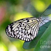 Beautiful Black N White Rice Paper Butterfly Art Print