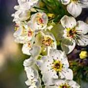 Beautiful Blossoms Art Print