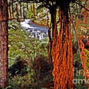Beautiful Bush Art Print
