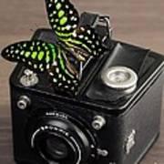 Beautiful Butterfly On A Kodak Brownie Camera Art Print