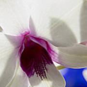 Beautiful Dendrobium Orchid Art Print by Dana Moyer