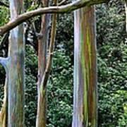 Beautiful Eucalyptus Art Print