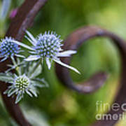 Beautiful Flower Buds Art Print