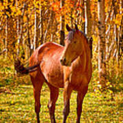 Beautiful Horse In The Autumn Aspen Colors Art Print by James BO  Insogna