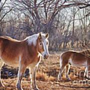 Beautiful Horses Art Print