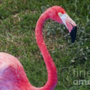 Beautiful In Pink Art Print