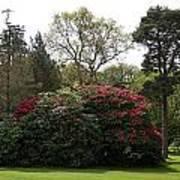 Beautiful Muckross Gardens In Spring Art Print