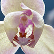 Beautiful Orchid Art Print by Dana Moyer