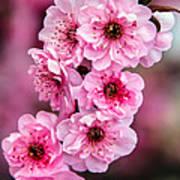 Beautiful Pink Blossoms Art Print by Robert Bales