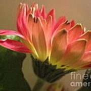 Beautiful Pink Gerbera Daisy 2 Art Print