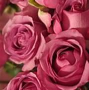 Beautiful Pink Roses 6 Art Print