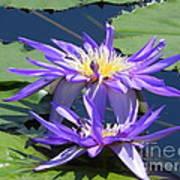Beautiful Purple Lilies Art Print