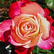 Beautiful Red Rose Art Print