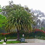 Beautiful Ventura Palm Art Print