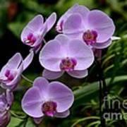 Beautiful Violet Purple Orchid Flowers Art Print