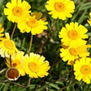 Beautiful Weeds 32655 Art Print