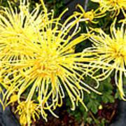 Beautiful Yellow Flower Art Print