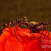 Beauty And The Bug Art Print