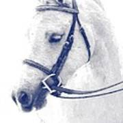 Beauty In A Bridle Art Print