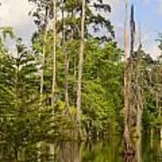 Beauty In A Swamp Art Print