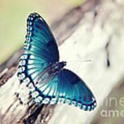 Beauty In Blue Art Print