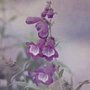 Beauty In Purple Art Print