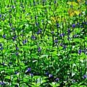 Beauty In The Meadow Art Print