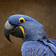 Beauty Is An Enchanted Soul - Hyacinth Macaw - Anodorhynchus Hyacinthinus Art Print