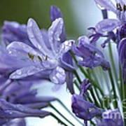 Beauty Lilies Art Print
