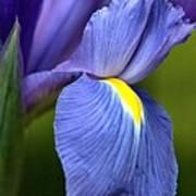 Beauty Of Iris Art Print