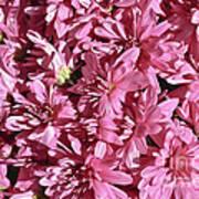 Beauty Of Pink Art Print