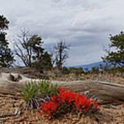 Beauty On 25 Mesa Panoramic Art Print