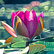 Beauty On The Water Art Print