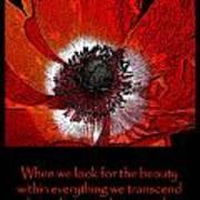 Beauty Red Anenome Art Print