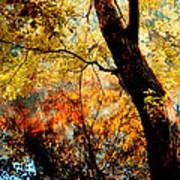 Beauty Reflected Art Print