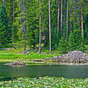 Beaver Dam In Heron Pond In Grand Teton National Park-wyoming Art Print