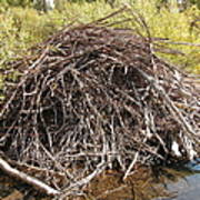 Beaver Lodge Art Print