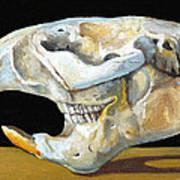 Beaver Skull 1 Art Print
