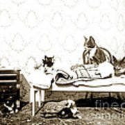 Bed Time For Kitty Cats Histrica Photo Circa 1900 Art Print