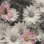 Bee And Daisies In Partial Color Art Print