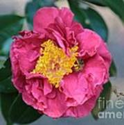 Bee And Wasp On Camellia Art Print